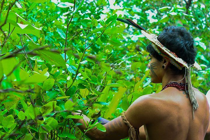 natureza #indigena #indio #mato #mata #verde #planta #meioambiente #preservacao #fotografia #arlivre #canon #canont6 #lightroom | Paiva, Natureza, Meio ambiente