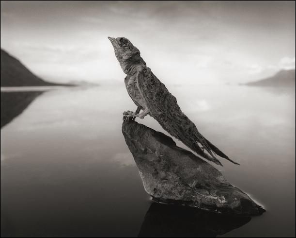 Este lago alcalino africano transforma animais em pedra