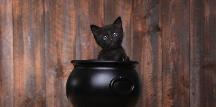 A black kitten inside a cauldron