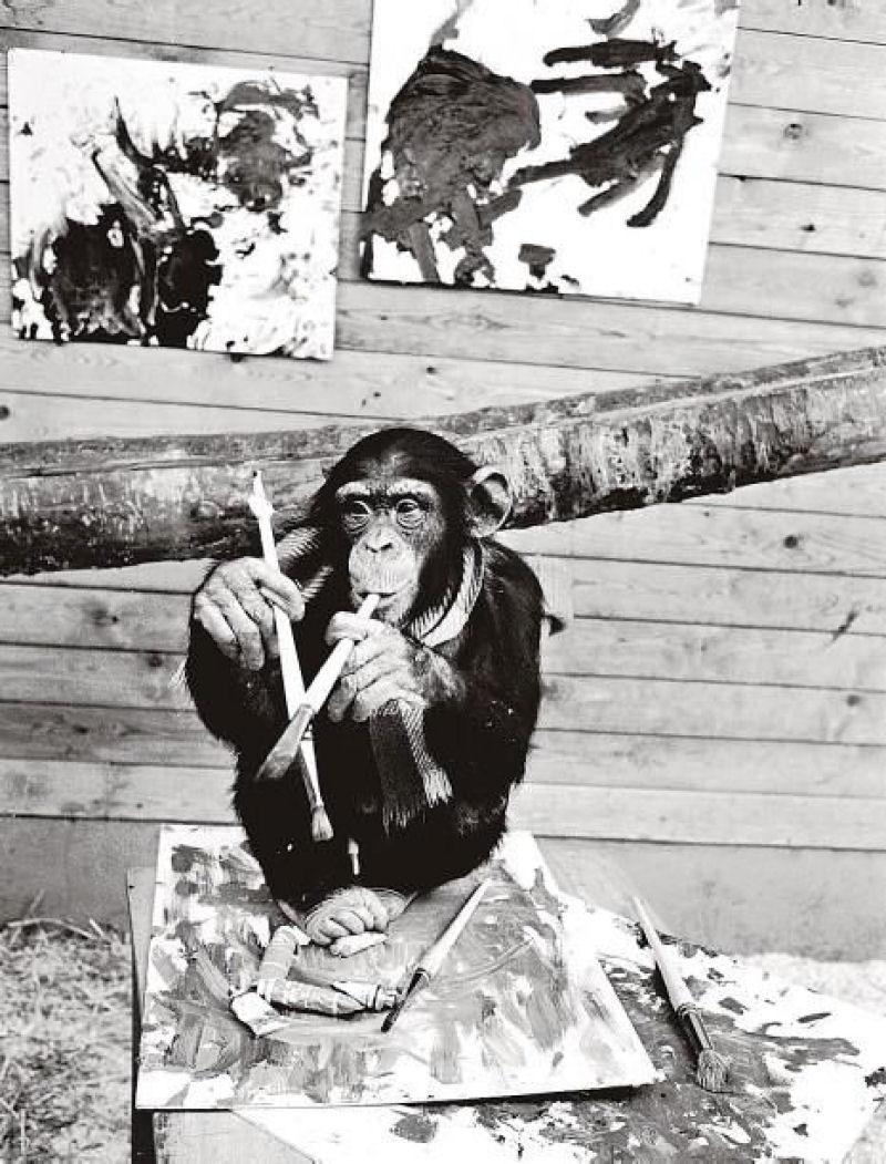Segundo Dali, este chimpanzé sim era o grande pintor e Pollock, um animal - MDig