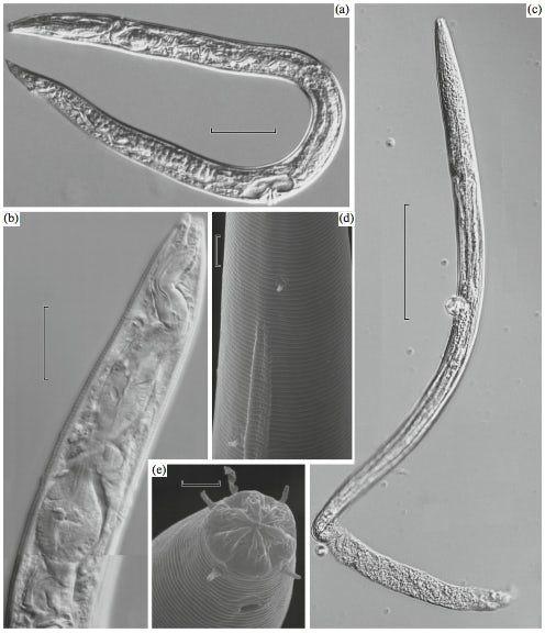 frozen-nematode-2.jpeg