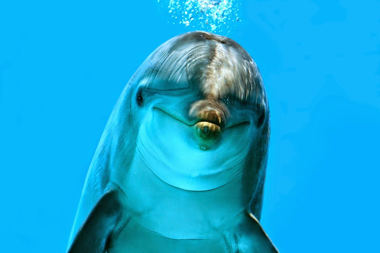InformaBicho: Golfinho-nariz-de-garrafa