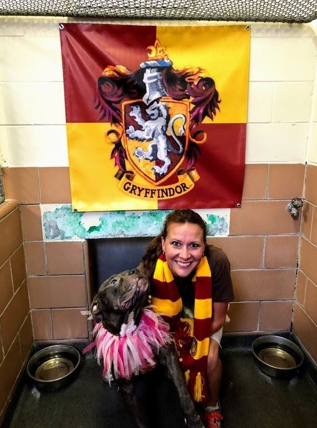 Gryffindor pups are known to be brave and courageous, and are often athletic types.