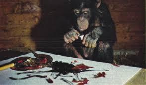Обезьяна картина. Картины шимпанзе были признаны лучшими на выставке авангардистов