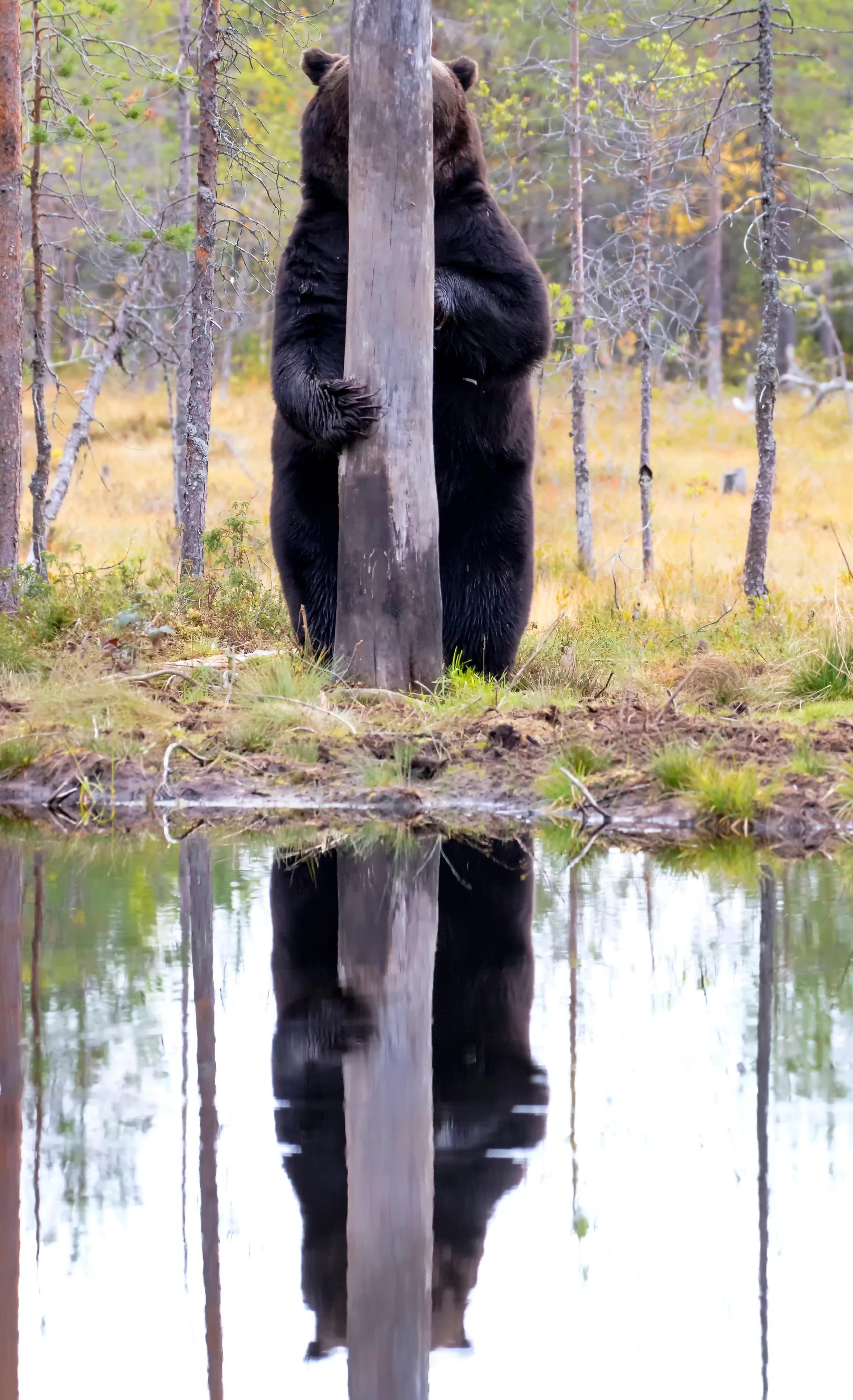 Las 44 mejores imágenes de 'The Comedy Wildlife Photography Awards 2020'.  +OJO DATOS - Foro Coches