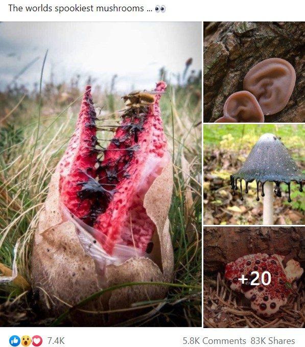 Os 'cogumelos mais assustadores do mundo' são reais?