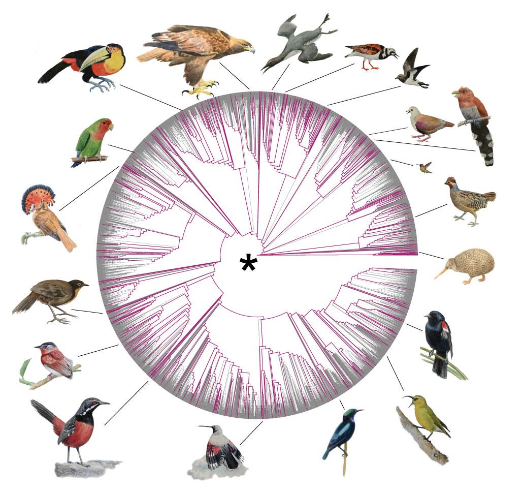 """Centenas de novos genomas ajudam a preencher a """"árvore da vida"""" dos pássaros"""