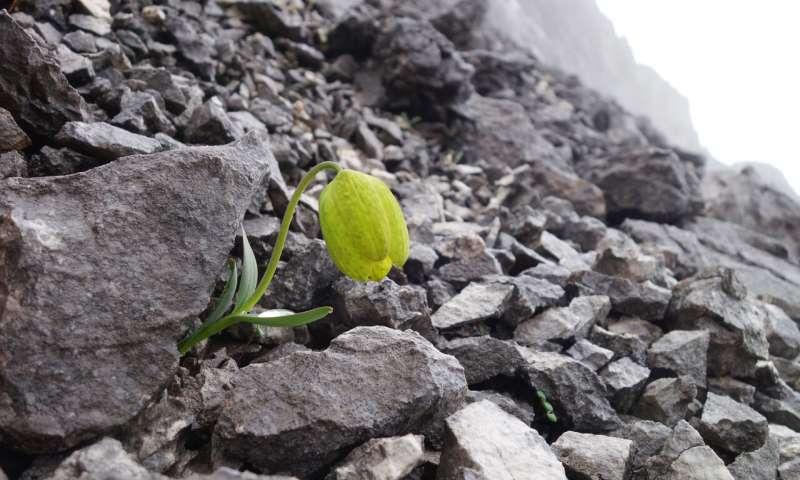 A planta evolui para se tornar menos visível aos humanos