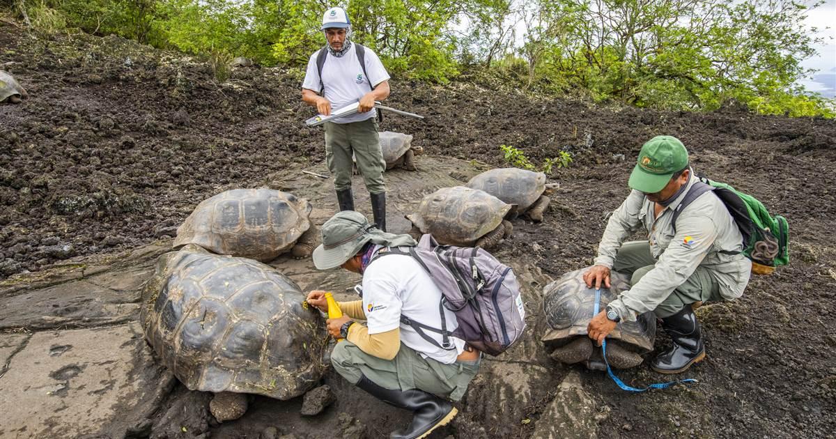 Você conhece o Galápagos Tortoise?