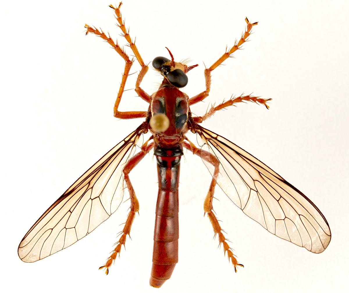 Mosquitos com nome de heróis?