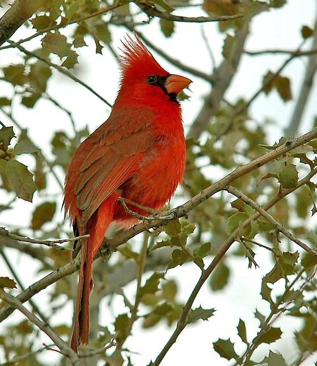 Canções, sons e a vida dos pássaros