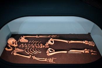 Estudo descobre o porquê dos ancestrais humanos possuíam um membro maior que o outro