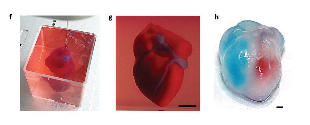 Modelo de coração em tamanho real impresso em 3D de material semelhante a tecido cardíaco