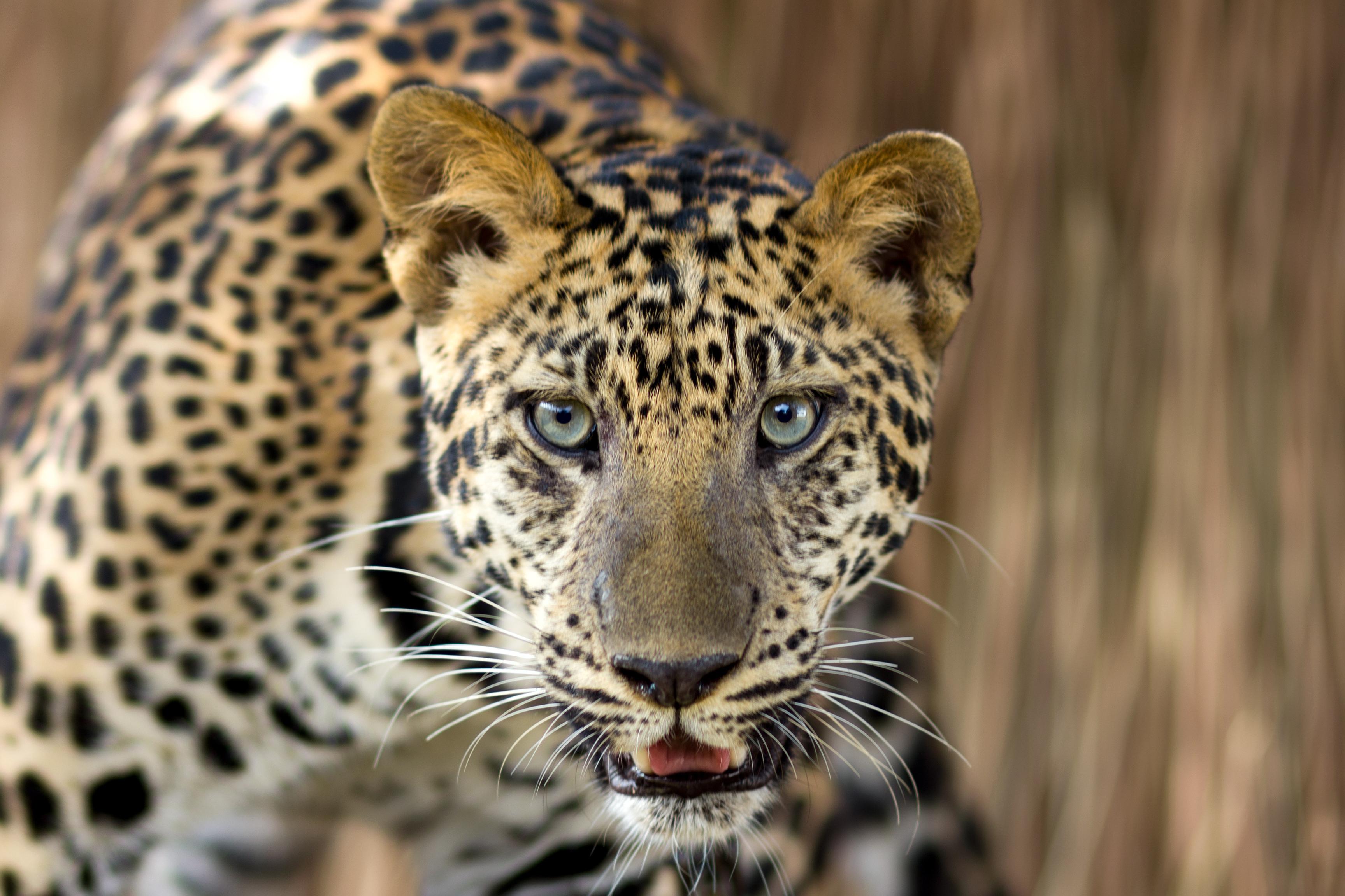 As 10 espécies mais ameaçadas da Terra