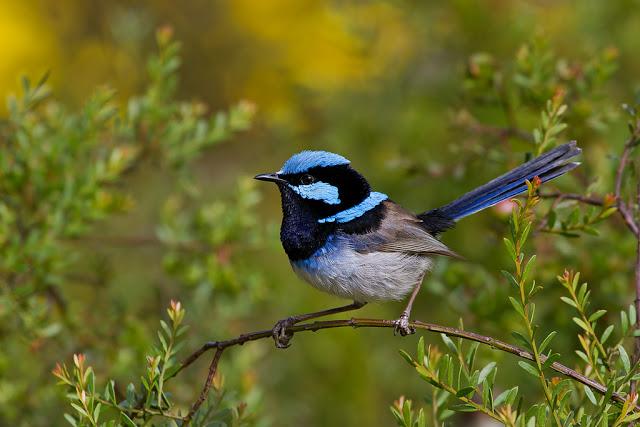 Pássaros espertos lembram de novos truques