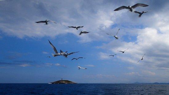 A migração de andorinhas leva as aves ao caminho dos furacões