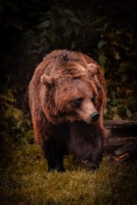 Fim do crime na loja de conveniência Bear