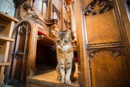 Catedral celebra serviço memorial para gato
