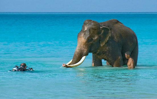 Os elefantes podem nadar?