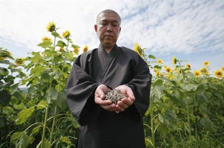 Japão planta girassóis para reduzir os níveis de radiação do solo |  Curiosidades do Japão