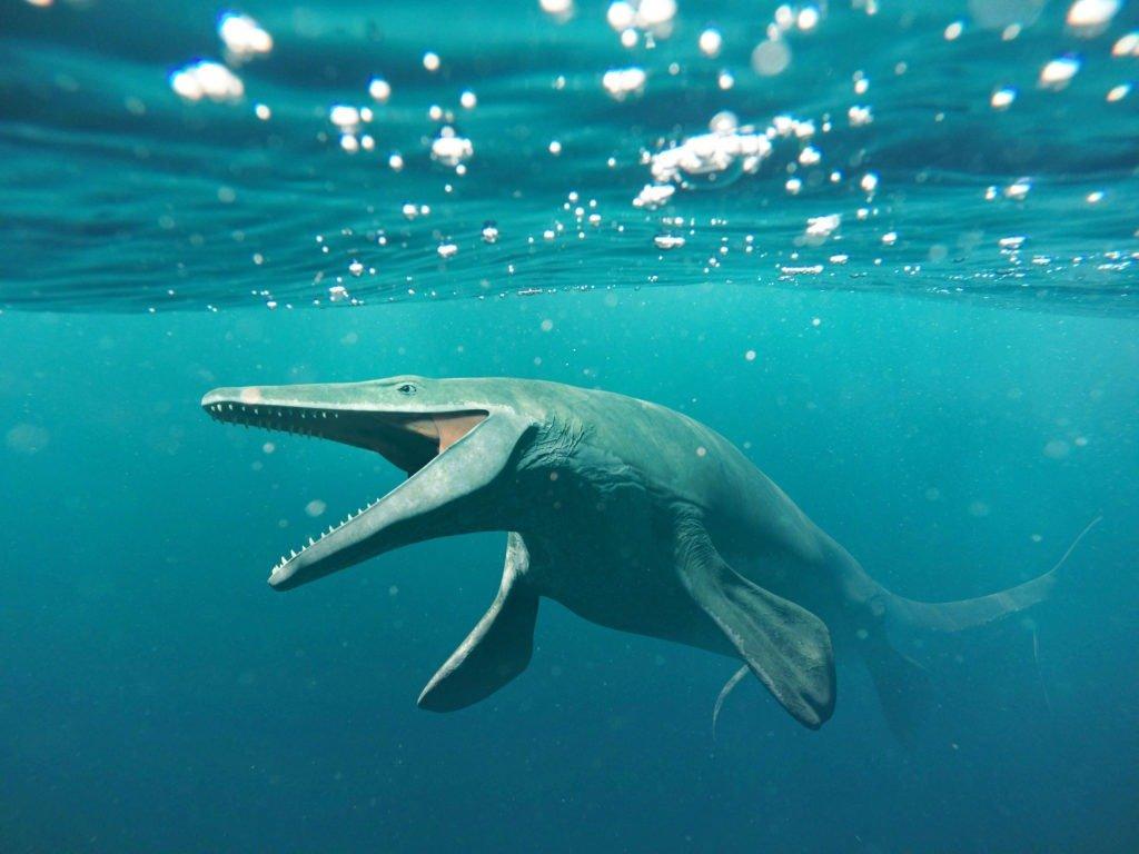 Os maiores animais de todos os tempos: 5 gigantes do oceano