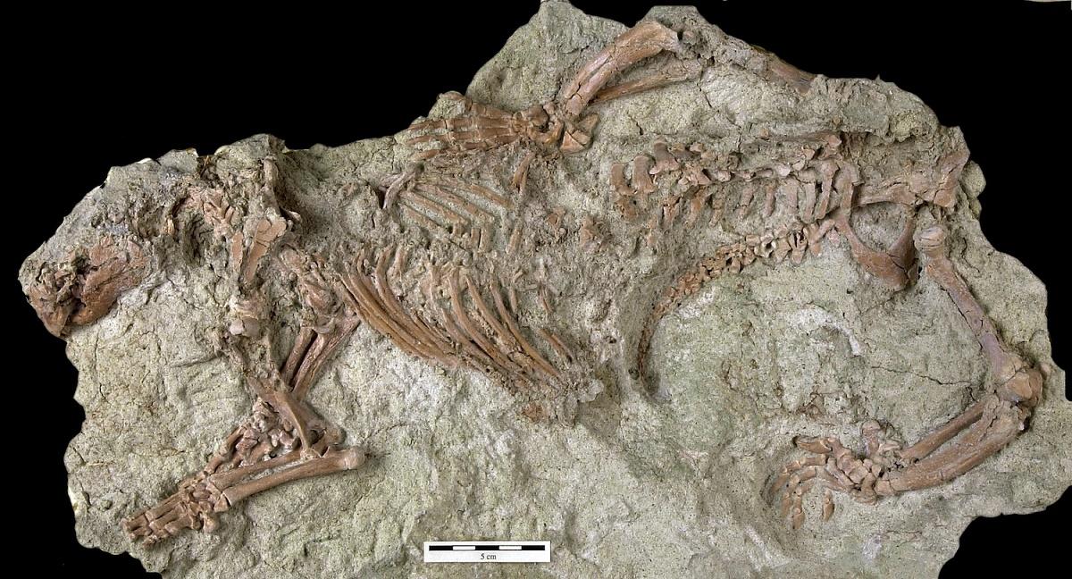 A 'Besta Louca' que viveu com os dinossauros e desafia toda a ciência