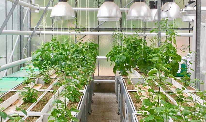 A vida subterrânea das plantas