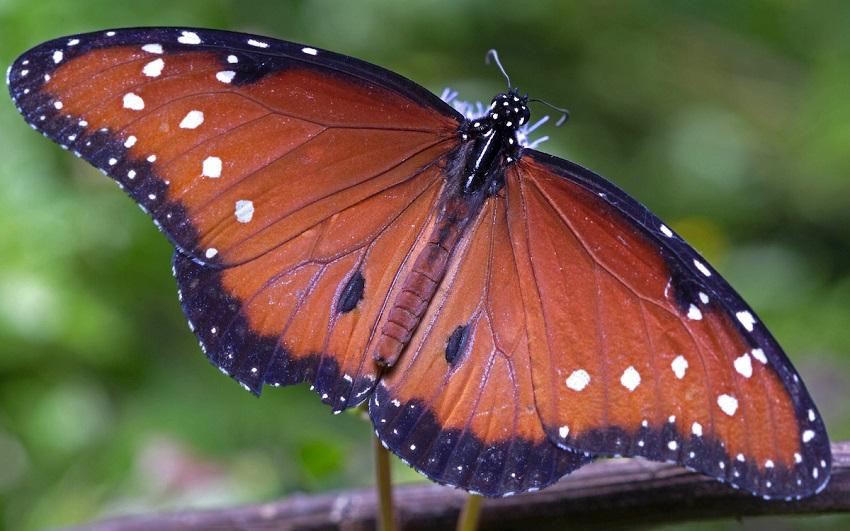 A natureza inspira um novo sensor de hidrogênio