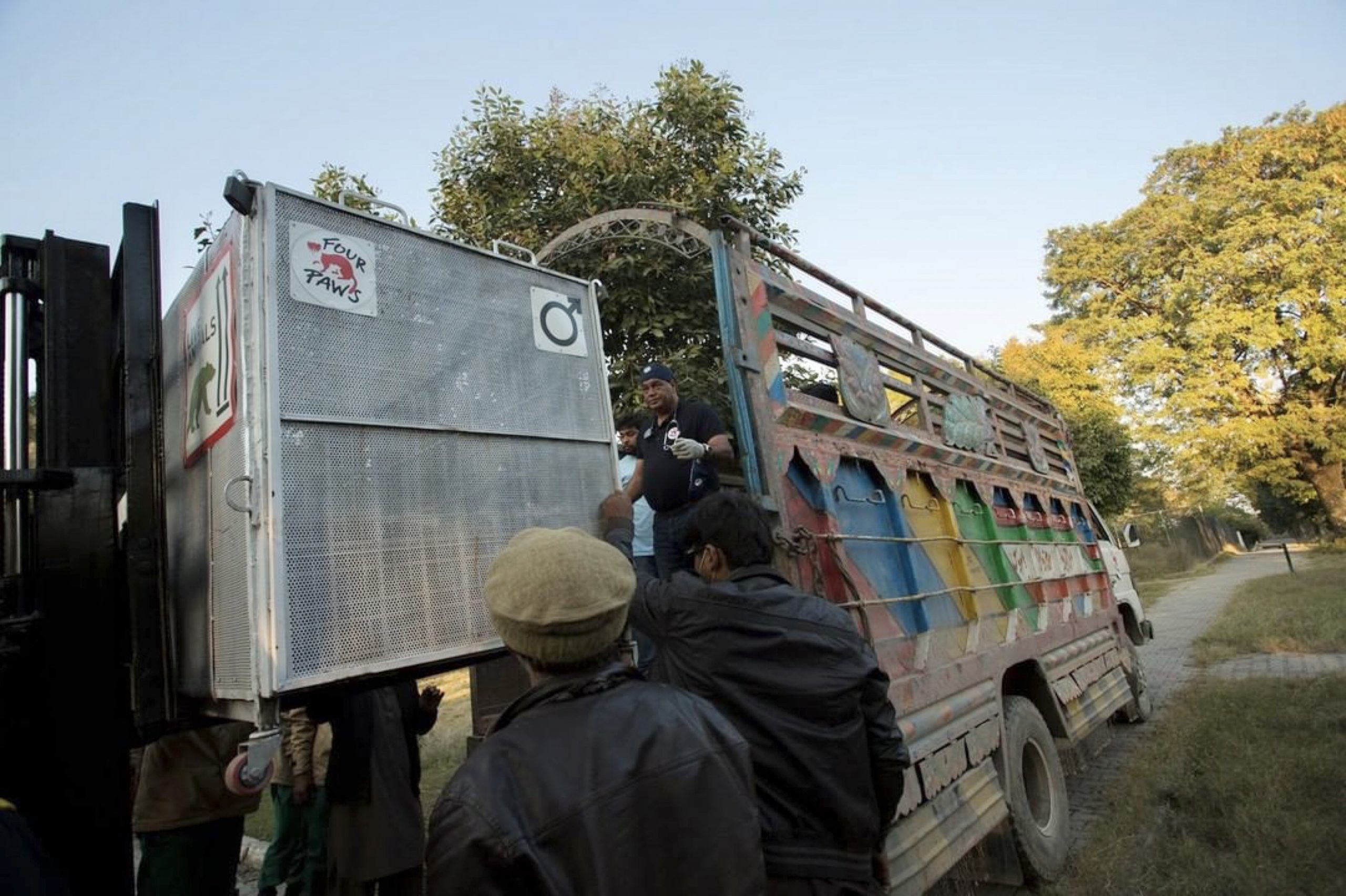 Urso é resgatado do zoológico de Marghazar  e transferido para a Jordânia