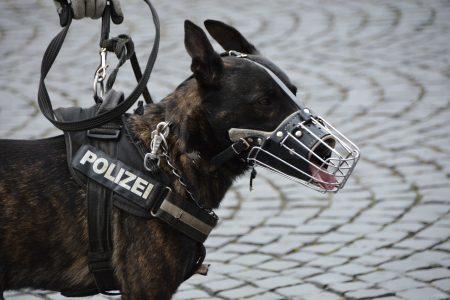 Cachorro Resgatado das Mandíbulas de Jacaré torna-se Delegado do Xerife