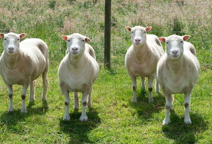 Ascensão dos Clones: 2 formas de clonagem que já estão acontecendo