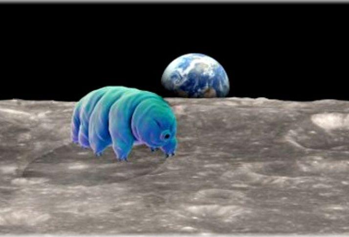 A infestação de tardígrados na Lua revela uma incrível resistência de microrganismos no espaço