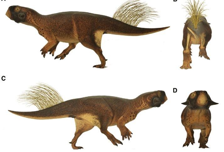 Fóssil encontrado sugere que dinossauros eram atraídos pelos companheiros pelo cheiro